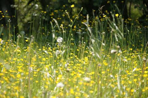 Heuschnupfen Pollen<br /> das ganze Jahr aktiv